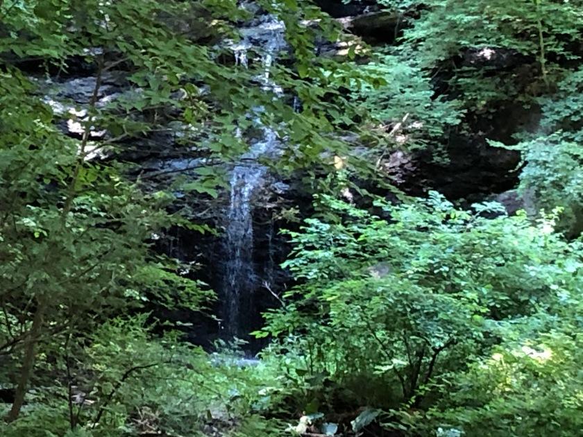 Woods 5